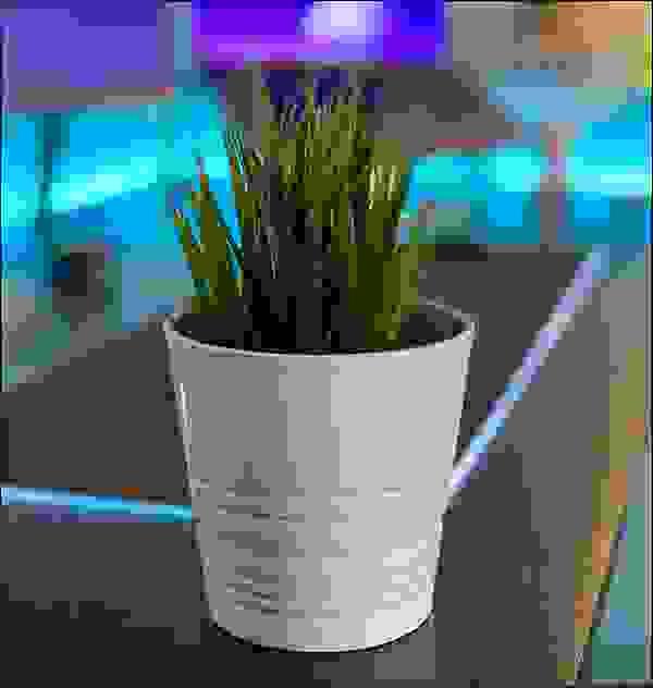 النباتات في المكتب