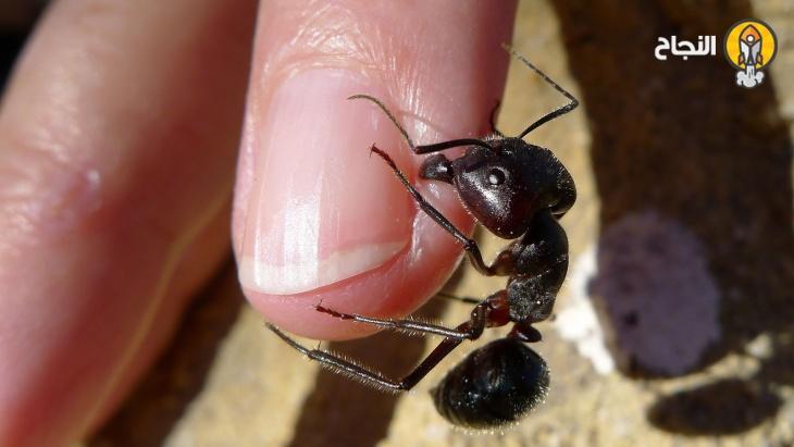 علاج قرصة النمل وأهم الطرق للتخلص من النمل في المنزل