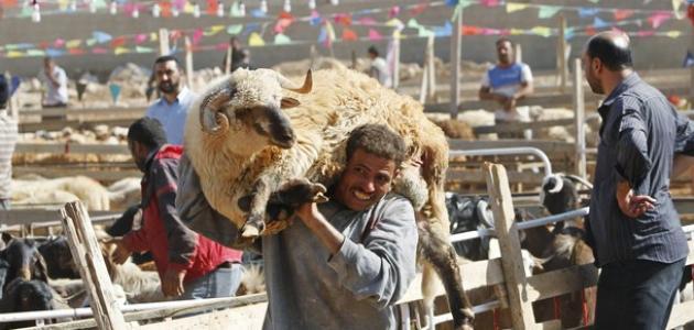 عيد الأضحى في مصر